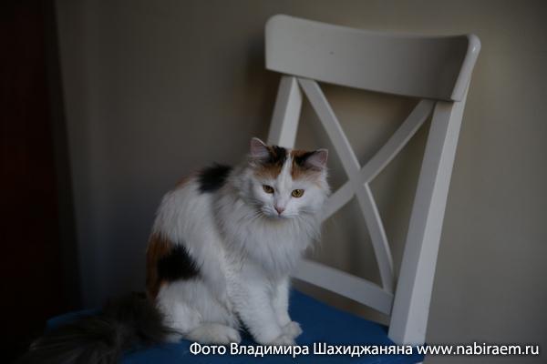 кошка Пуха
