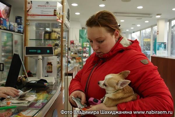 собака в аптеке