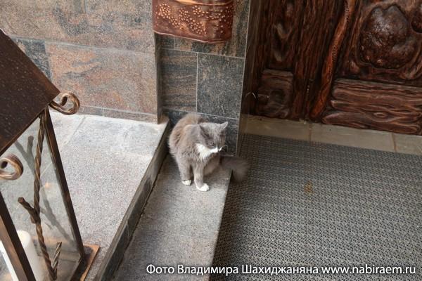 кот у ресторана