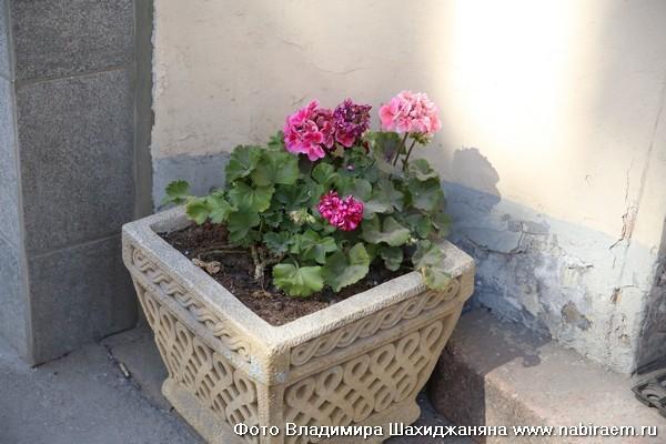Цветы у подъезда